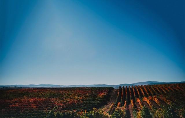 Fuentenebro · Viñedos tradicionales en las laderas más altas