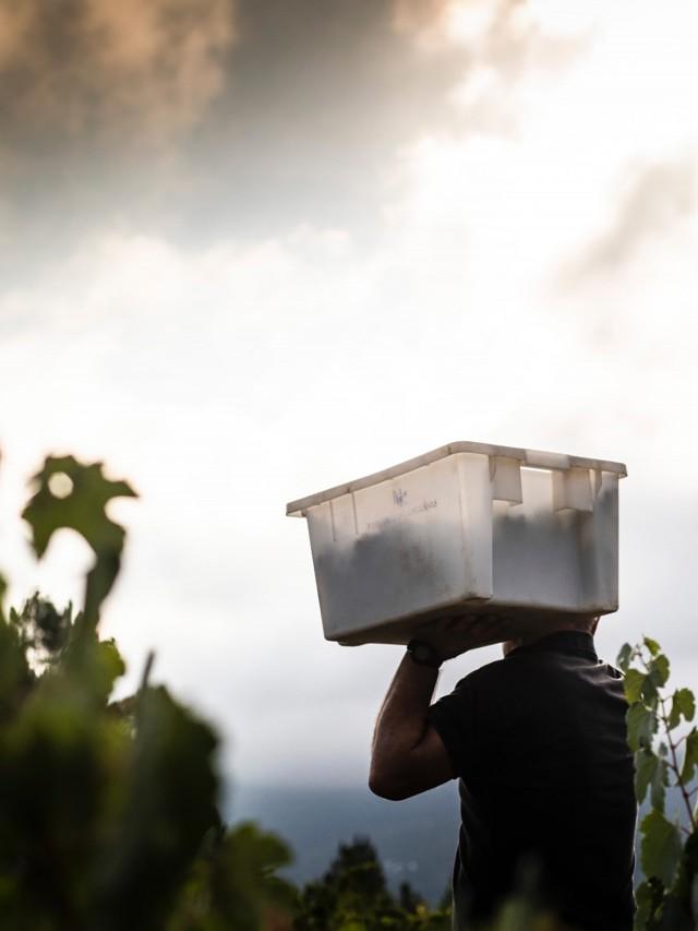 Las viñas mínimas y el trabajo manual han preservado, a su vez, la idiosincrasia antigua.· La viticultura es un diálogo íntimo con la naturaleza.